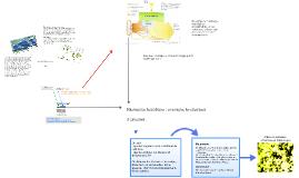Copy of Les flux de Carbone sur Terre