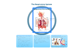 A Tour through the Respiratory System