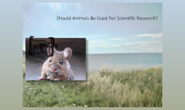 essay writing tips to should animals be used for research while such arguments put forth by animal rights activists call for a ban on this practice there also exist arguments in favor of this practice which are