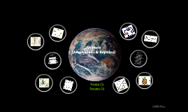 Biology - Reptiles & Amphibians