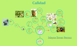 Copy of Calidad