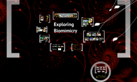 Exploring Biomimicry_TY