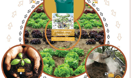 Composting in DPS Schools