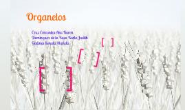 "Organelos ""Biologìa Celular y Molecular"""