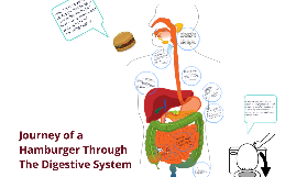 journey of hamburger by ele na on prezi