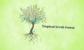 Tropical Scrub Forest