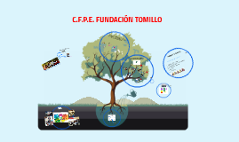 Copy of FUNDACIÓN TOMILLO