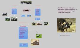 Bufalos Argentinos
