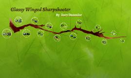 Glassy Winged Sharpshooter