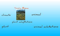 tundra biome - Kyle
