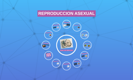 REPRODUCCION ASEXUAL