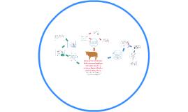 Diseño de una solución para diálisis peritoneal empleando co