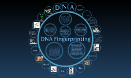 Copy of DNA Fingerprinting