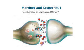 Copy of Copy of Martinez and Kesner (1991)