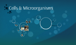 Cells & Microorganisms