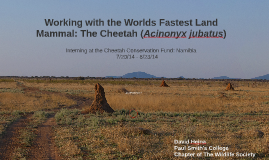 Working with the Fastest Land Mammal: The Cheetah