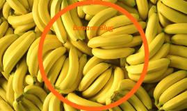 Banana Slug by Sophie Thompson on Prezi