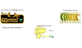 Pro Ecuador case: Fair trade bananas