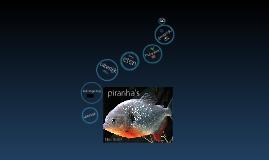 piranha's