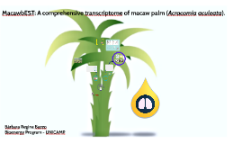 Copy of MacawbEST: A comprehensive transcriptome of macaw palm (Acro