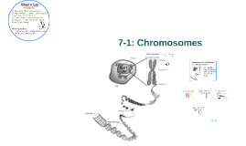 7-1 CP: Chromosomes