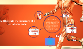 Structure of a STRIATED Muscle
