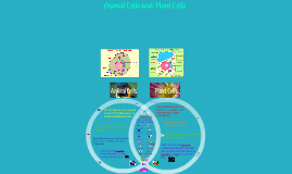Copy of Animal Cells and Plant Cells