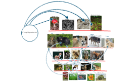 Copy of Temperate Rainforest Biome Food Web