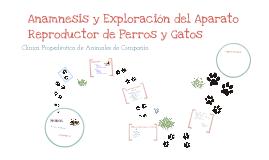 Anamnesis y Exploración del Aparato Reproductor de los Pequeños Animales