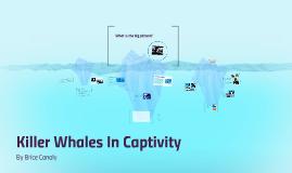 Killer Whale Captivity