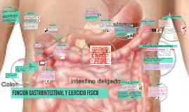 Copy of FUNCION GASTROINTESTINAL Y EJERCICIO FISICO