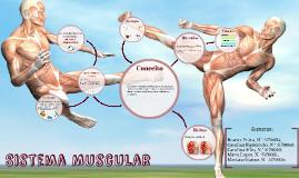 Sistema Muscular √