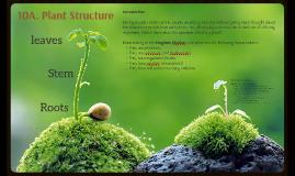 10A. Plant Structure