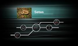 Copy of Setas