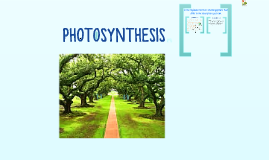 Copy of PHOTOSYNTHESIS
