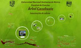 Compuestos del árbol Cazahuate