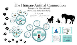 The Human-Animal Connection: Exploring Applications of Animal Assisted and Social Dog Therapies