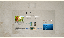 Planted, Give 2 Gain -5t'19 -