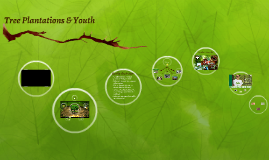Youth Plantation