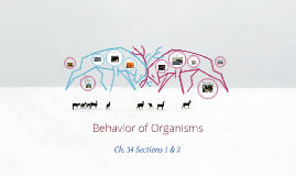 Behavior of Organisms - Animals