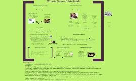 Copy of Copy of Historia Natural de la Rabia