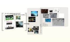 Holographic Architecture