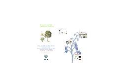 PLANTAS: HIERBAS, ARBUSTOS Y ÁRBOLES