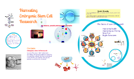 Copy of Embryonic Stem Cell Research