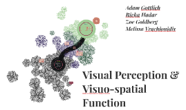 Visual Perception & Visuo-spatial Function