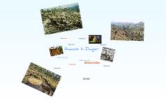 Amazon In Danger