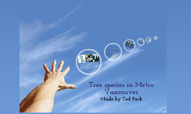Tree species existing in Metro Vancouver