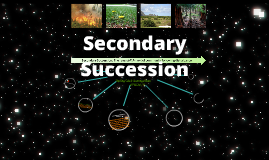 Copy of Secondary Successsion