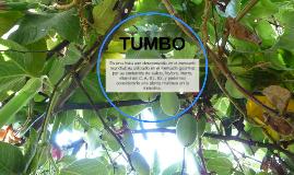 Copy of TUMBO
