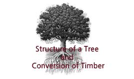 Year 9 / 10 Timber